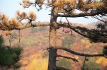 autumn_colors